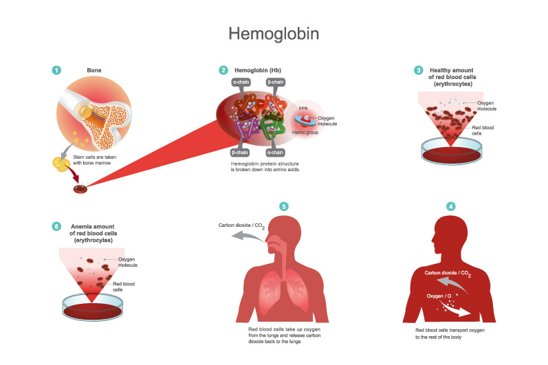 Hemoglobin- Low-high Ranges, Causes, Treatments And Care - Care Cover